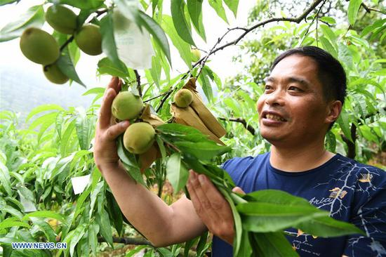 Desertification-tolerant peach variety helps villagers get rid of poverty in Wulong, Chongqing