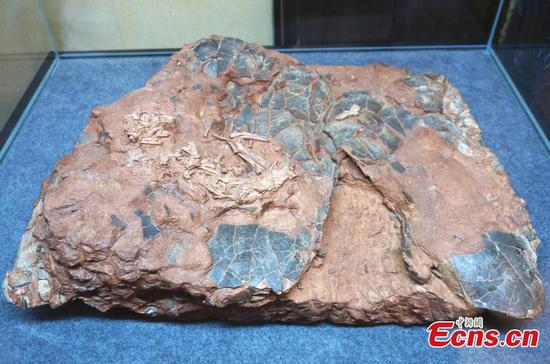 Returned fossils on display in Henan