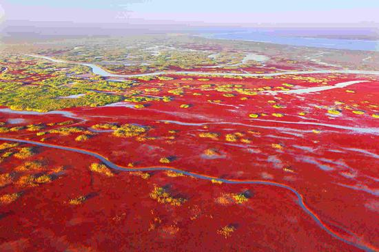 Vibrant autumn colors brighten Yellow River estuary